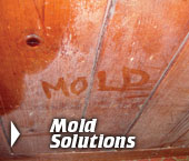Mold Removal In Greater Minneapolis